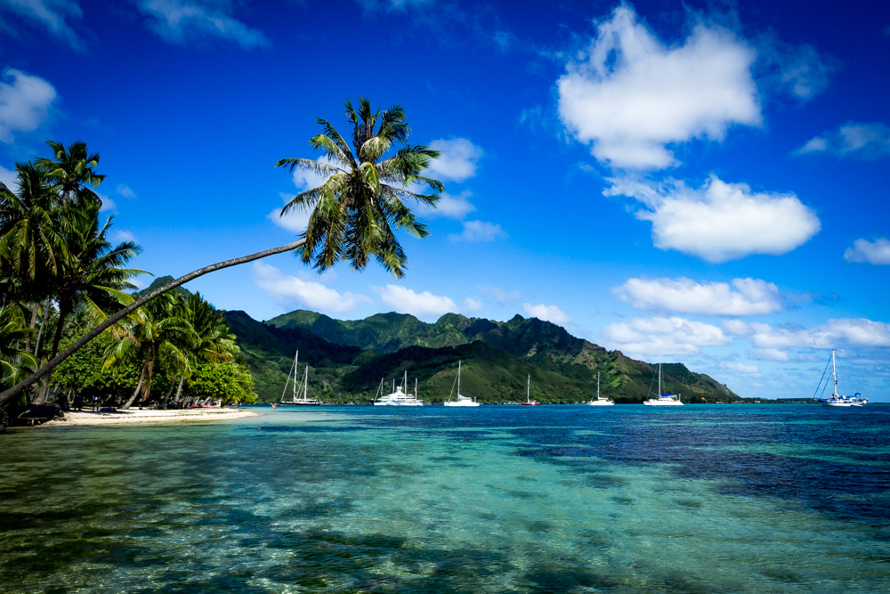 What Part Of The Island Is Best On Moorea