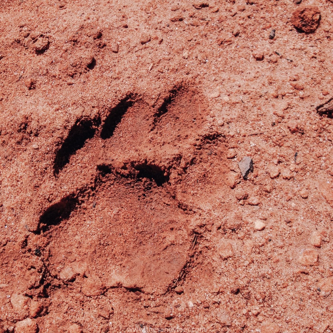 Volunteering | Volunteer overseas | Leopard Research South Africa