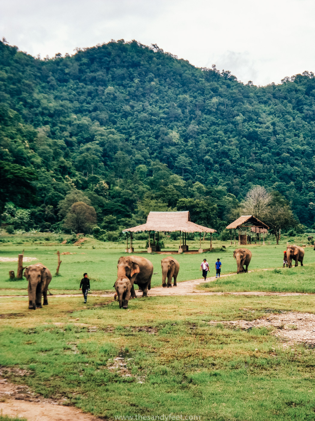 Volunteering | Volunteer overseas | Elephant Nature Park Thailand